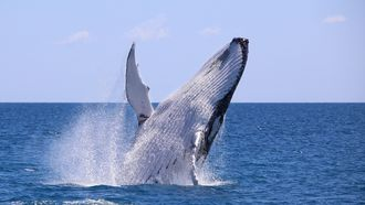 humpback whale; nature; wildlife experiences; island